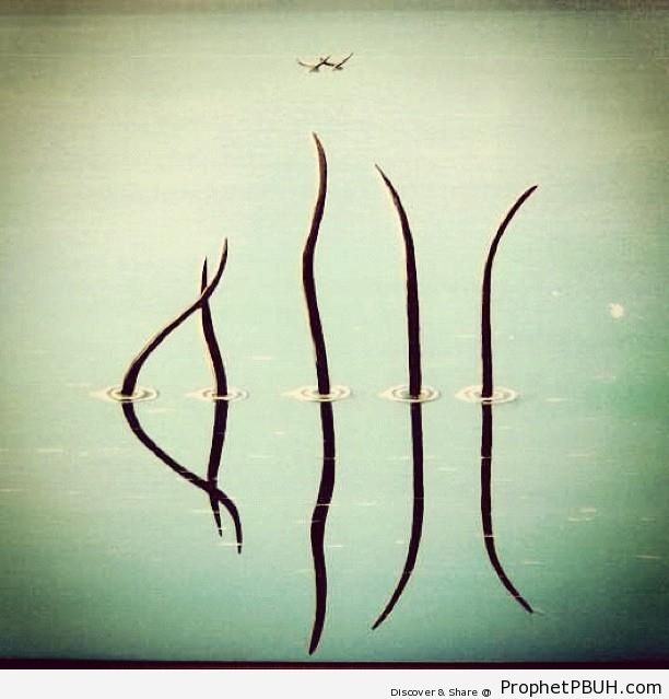 Allah-- Five Branches and Their Reflections Spell Out Allah-s Name - Photos