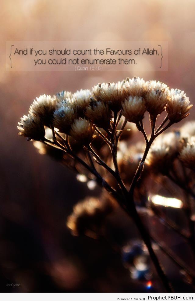 Allah-s Favors (Quran 16-18) - Quran 16-18