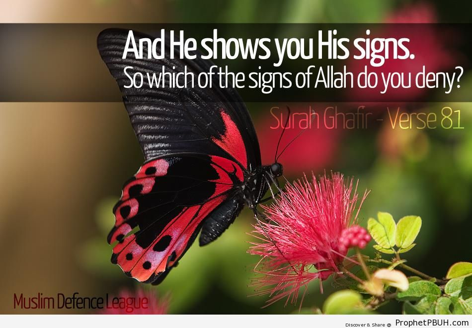 And He Shows You His Signs (Quran 40-81) - Photos