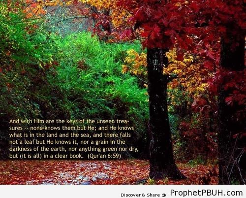 Ayahs from the Quran (13)