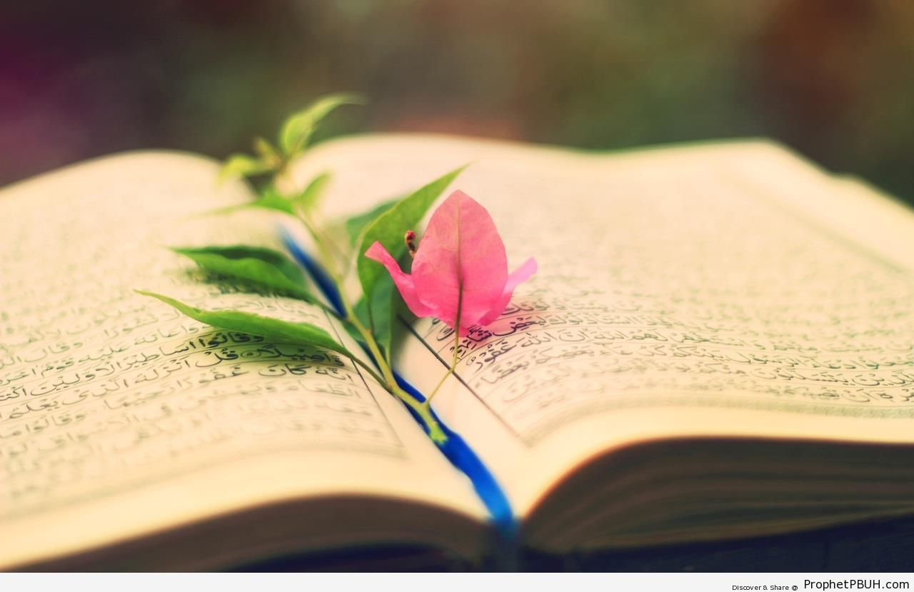 Blue and Pink Leaves on Book of Quran - Mushaf Photos (Books of Quran)
