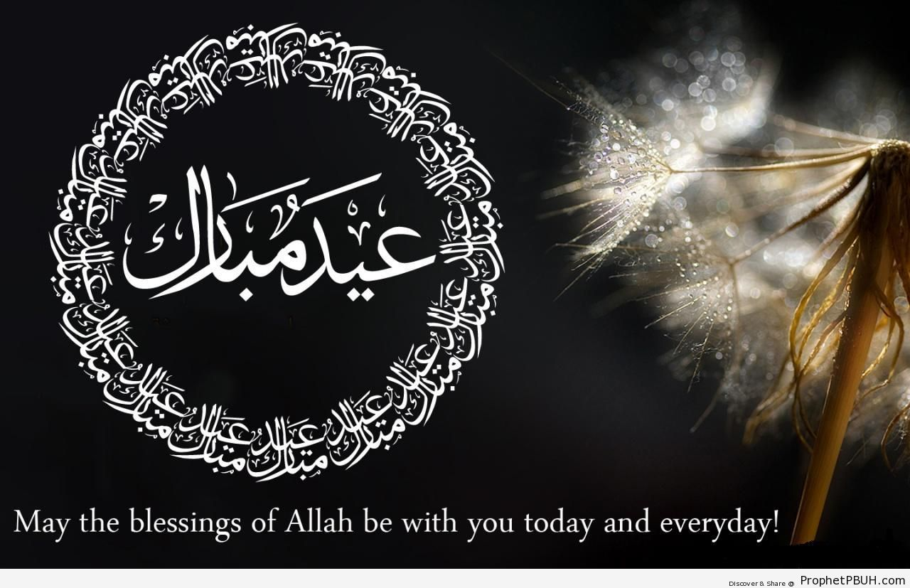 Eid Mubarak Wishes and Calligraphy On Photo of Wet Dandelion - Eid Mubarak Greeting Cards, Graphics, and Wallpapers