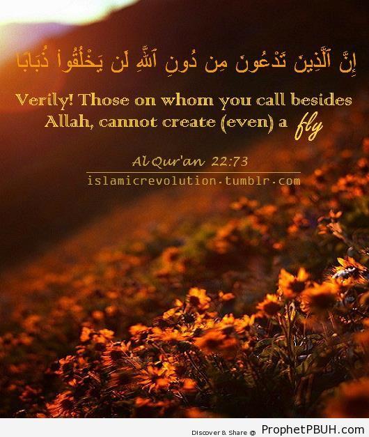 Even a Fly (Quran 22-73) - Photos