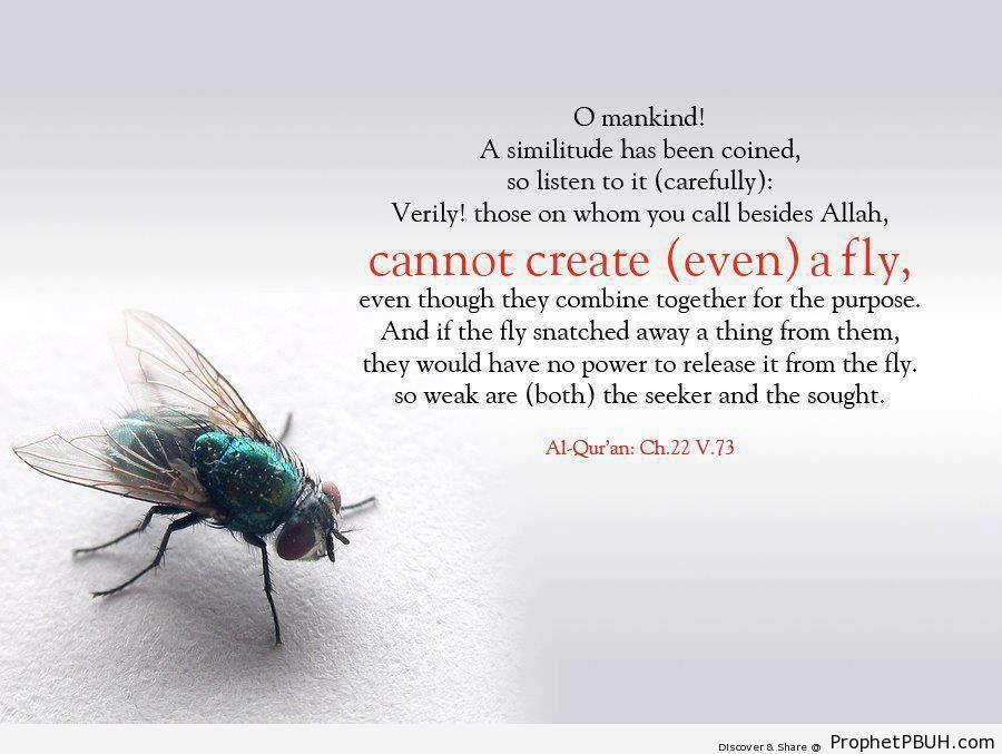 Even a Fly (Quran 22-73; Surat al-Haj) - Photos