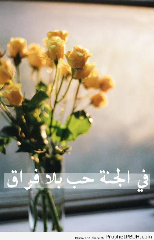 Love in Paradise - Islamic Quotes