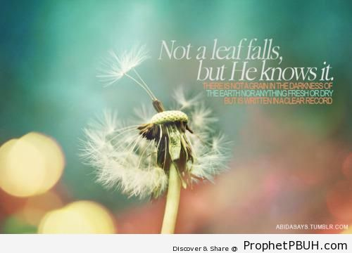 Not a leaf falls but& - Islamic Quotes About Allah's Omniscience (God's Knowledge and Awareness of Everything)