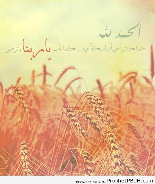 Praise be to Allah - Photos of Yellow Grass
