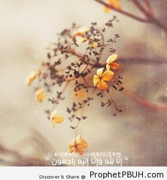 Quran 2-156 - Quran 2-156
