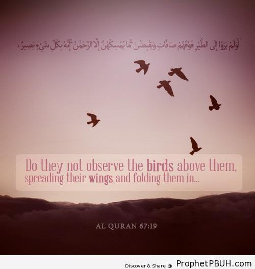 Quran 67-19 - Quran 1-6-7