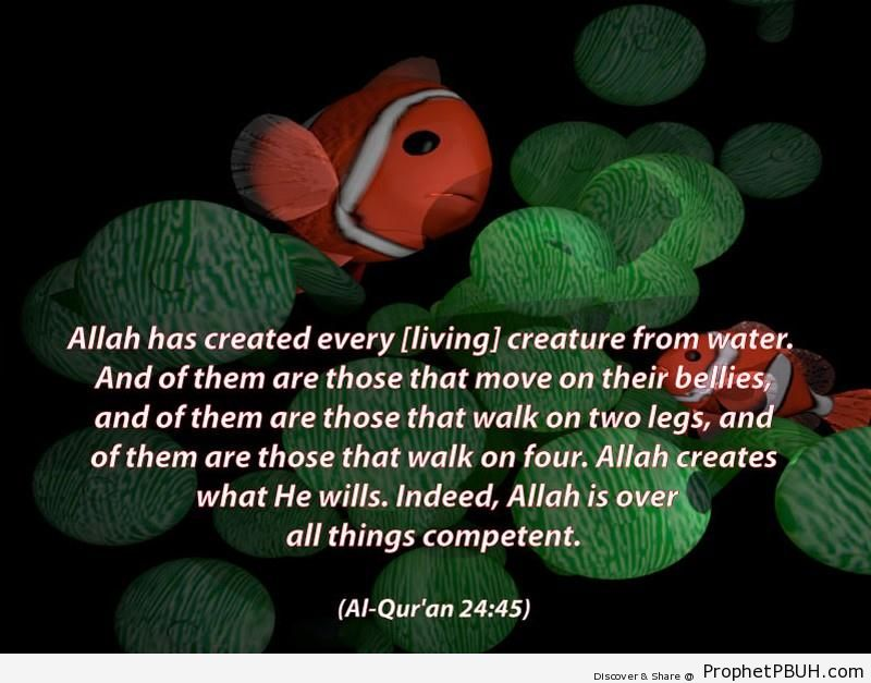 Quran Chapter 24 Verse 451