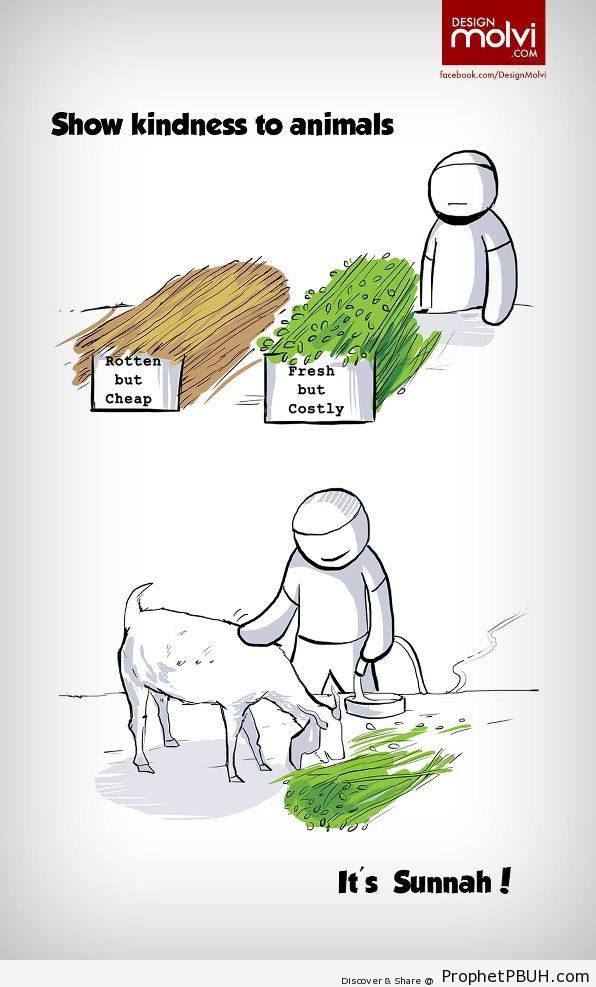 Show Kindness to Animals (Islamic Cartoon) - Drawings