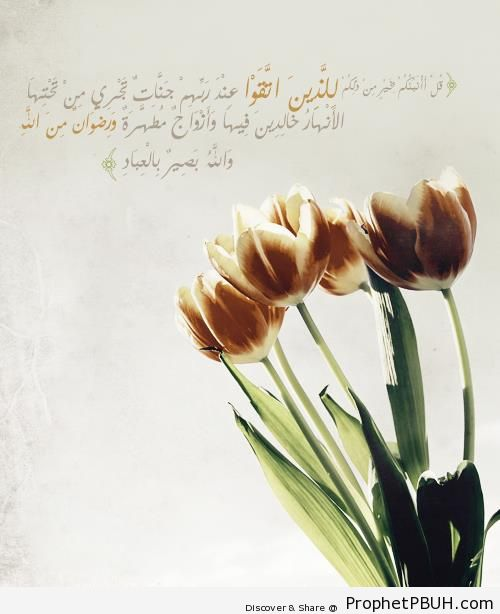 Something Better (Quran 3-15; Surat Al `Imran) - Photos of Flowers