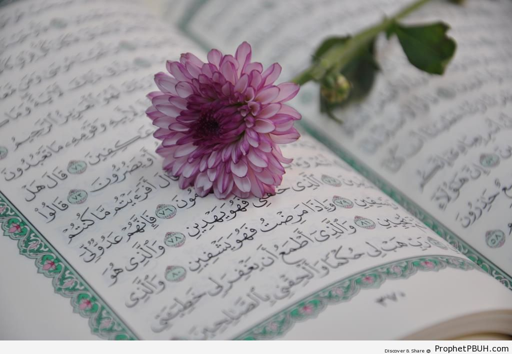 Quran Tumblr Pink flower-on-quran