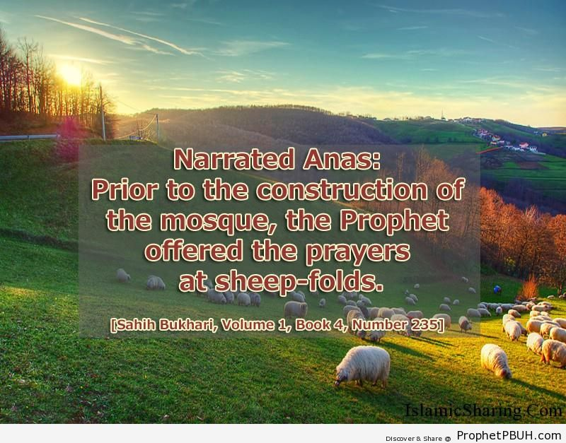 sahih bukhari volume 1 book 4 number 235