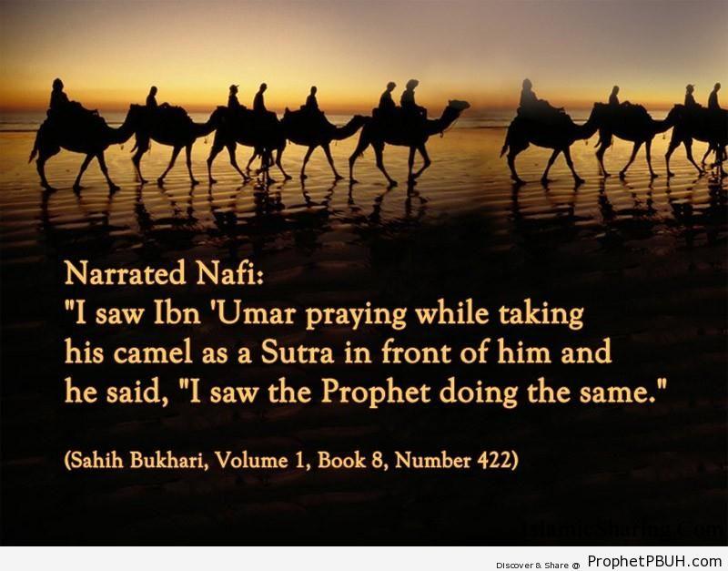sahih bukhari volume 1 book 8 number 422