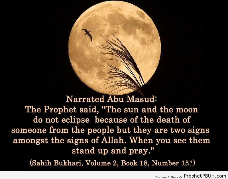 sahih bukhari volume 2 book 18 number 151