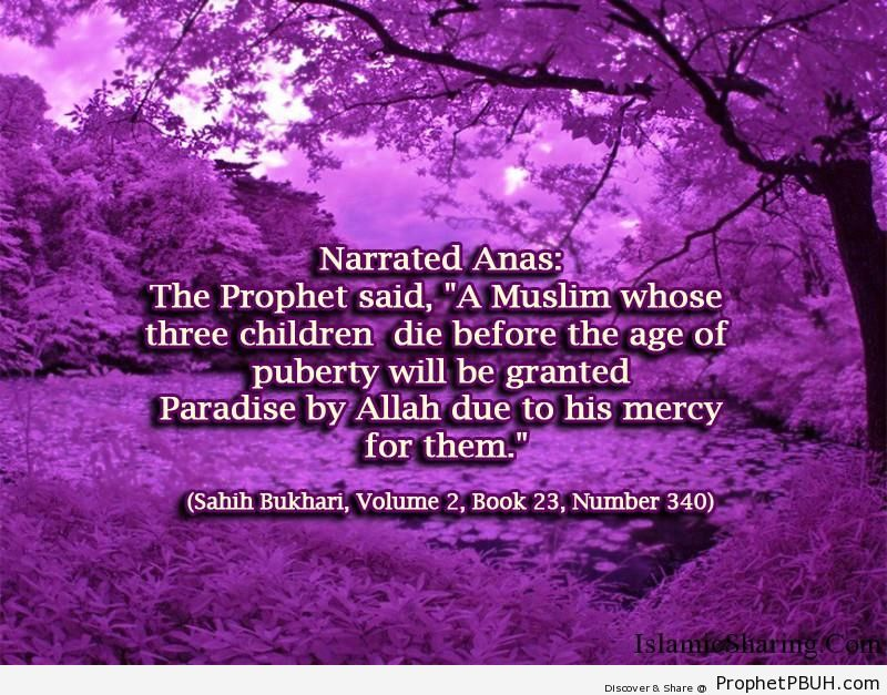 sahih bukhari volume 2 book 23 number 340