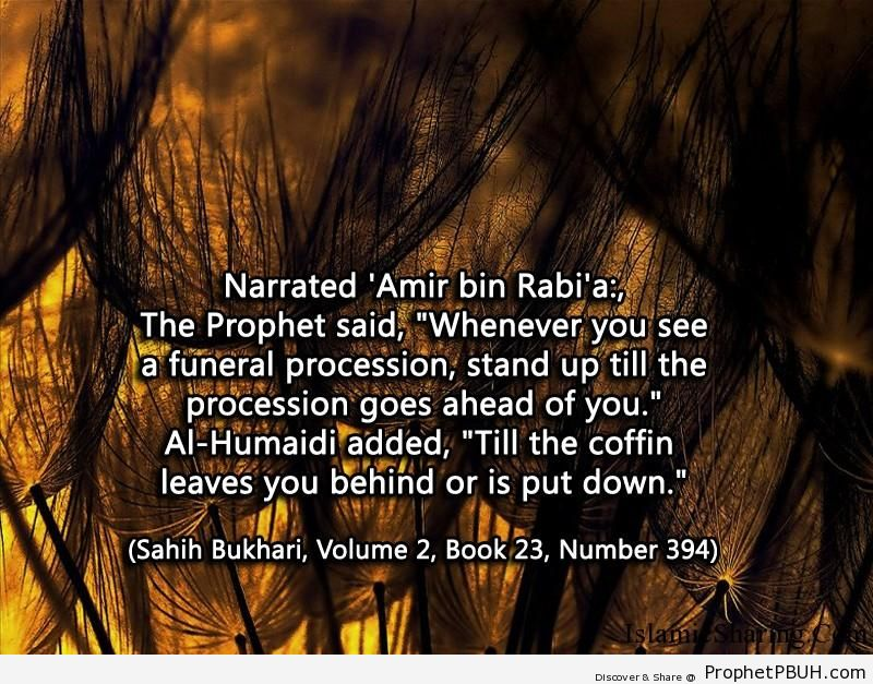 sahih bukhari volume 2 book 23 number 394
