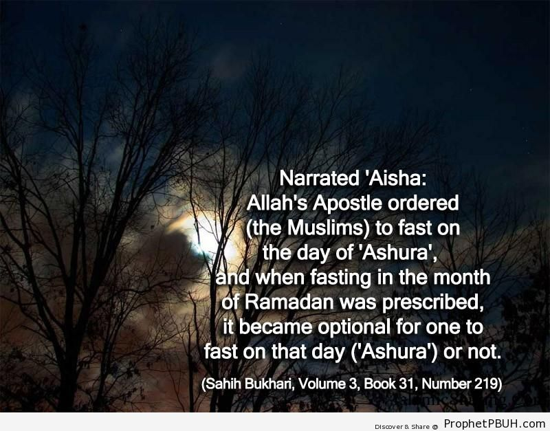 sahih bukhari volume 3 book 31 number 219