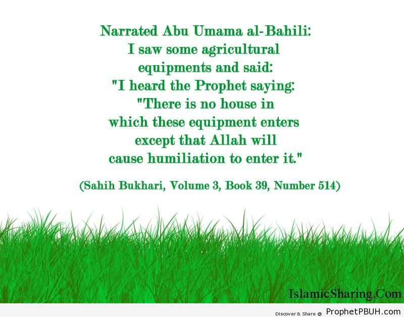 sahih bukhari volume 3 book 39 number 514
