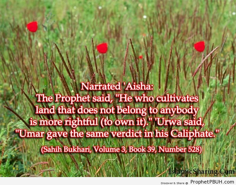 sahih bukhari volume 3 book 39 number 528