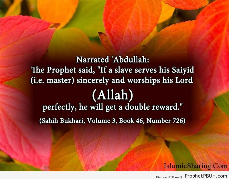 sahih bukhari volume 3 book 46 number 726
