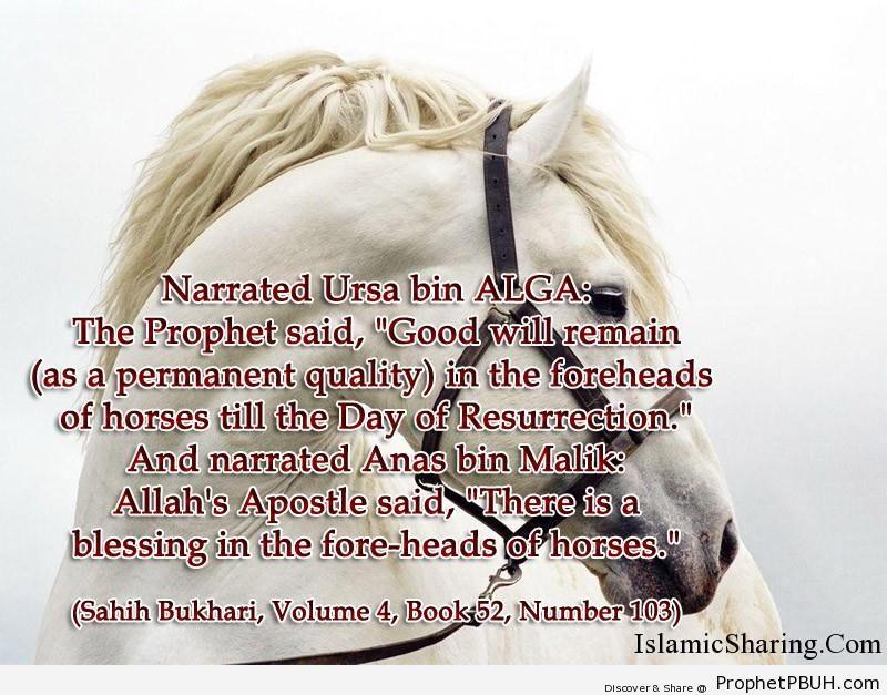 sahih bukhari volume 4 book 52 number 103