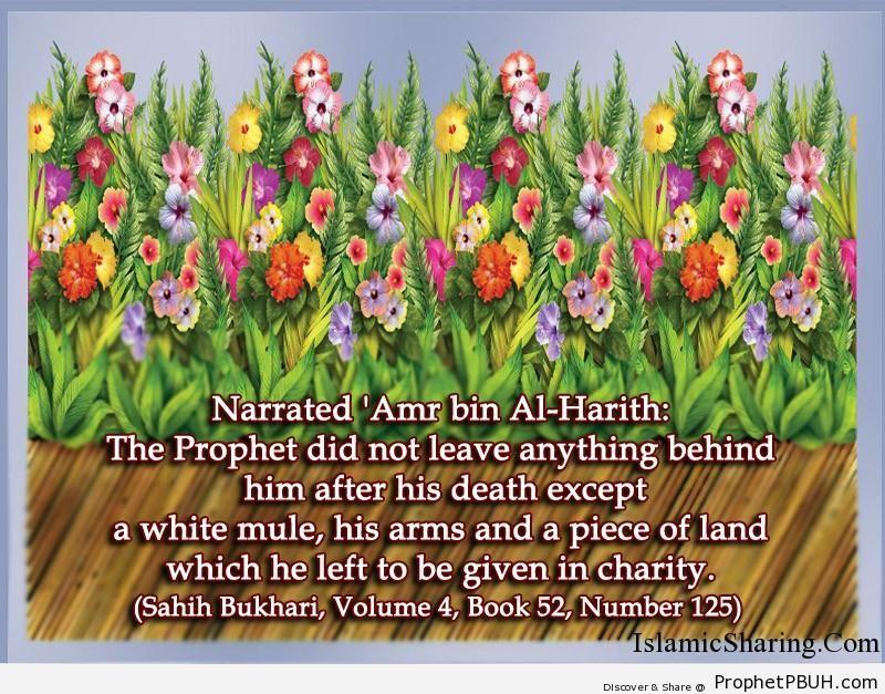 sahih bukhari volume 4 book 52 number 125