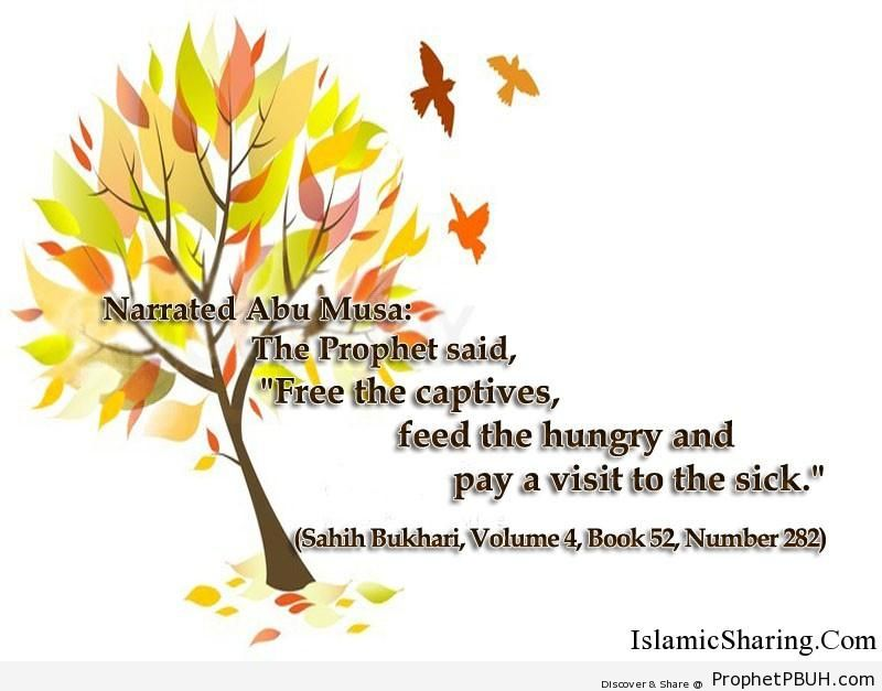 sahih bukhari volume 4 book 52 number 282