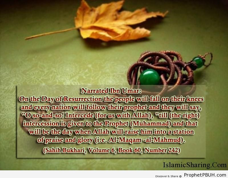 sahih bukhari volume 6 book 60 number 242