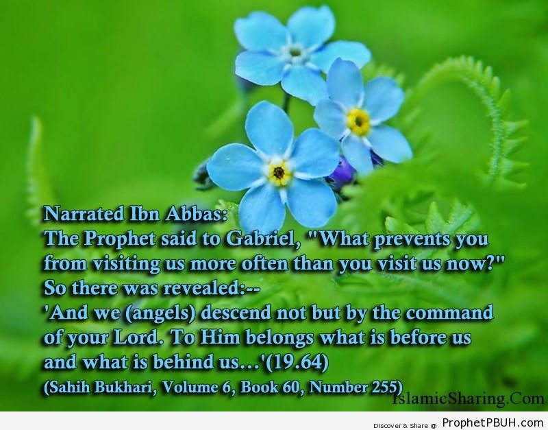 sahih bukhari volume 6 book 60 number 255
