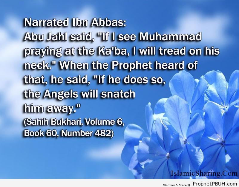 sahih bukhari volume 6 book 60 number 482
