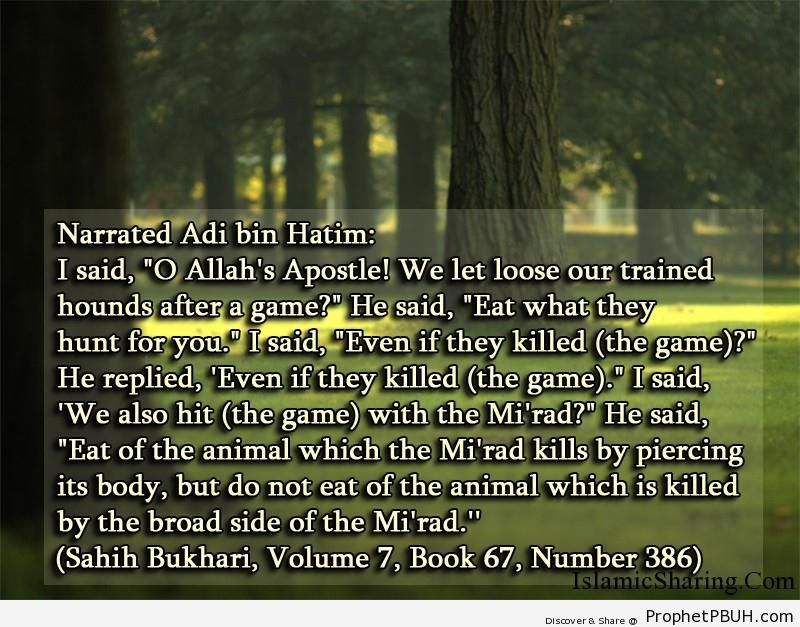 sahih bukhari volume 7 book 67 number 386