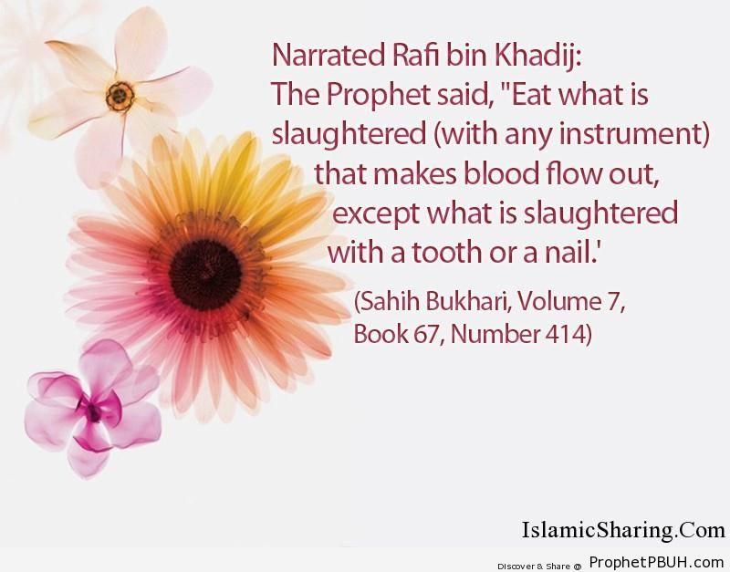 sahih bukhari volume 7 book 67 number 414
