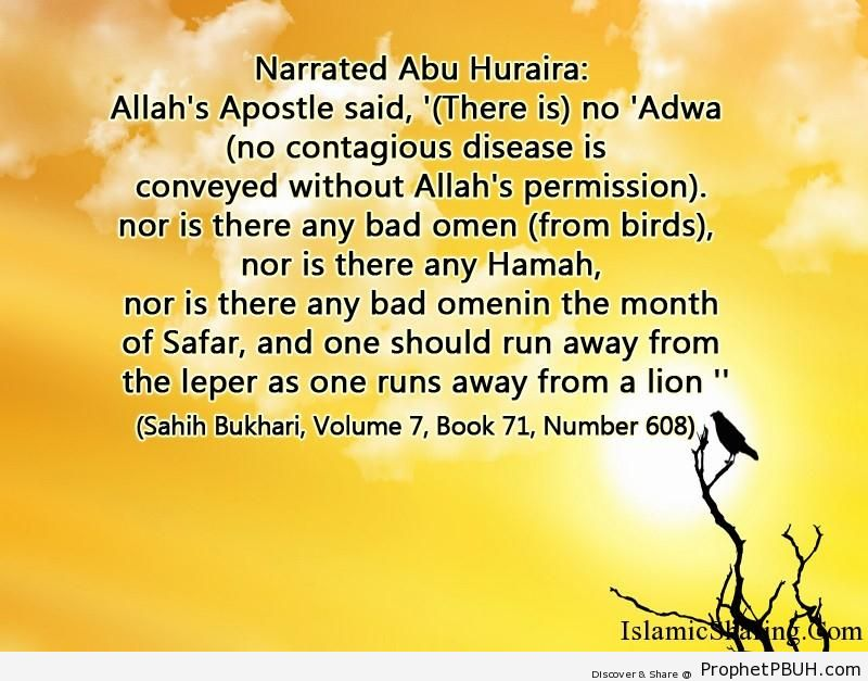 sahih bukhari volume 7 book 71 number 608
