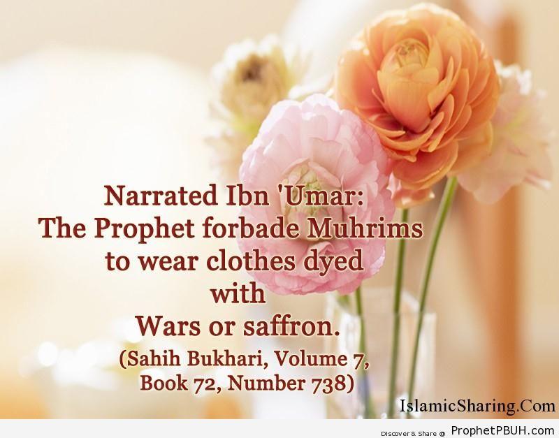 sahih bukhari volume 7 book 72 number 738