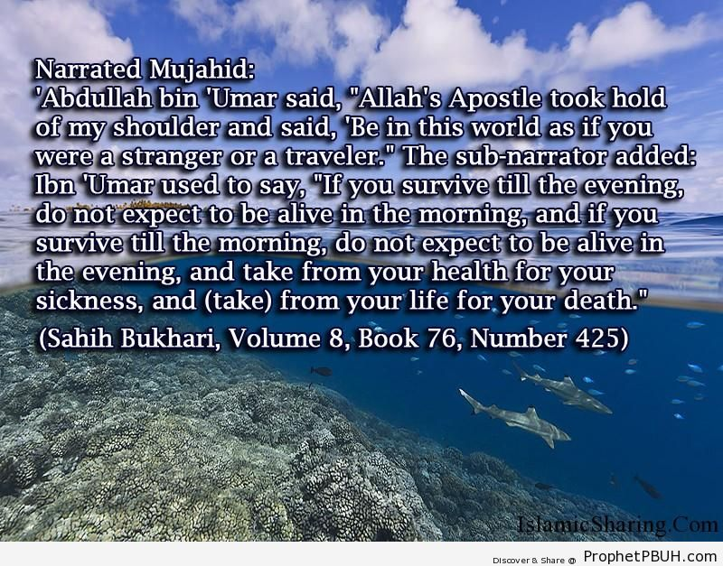 sahih bukhari volume 8 book 76 number 425