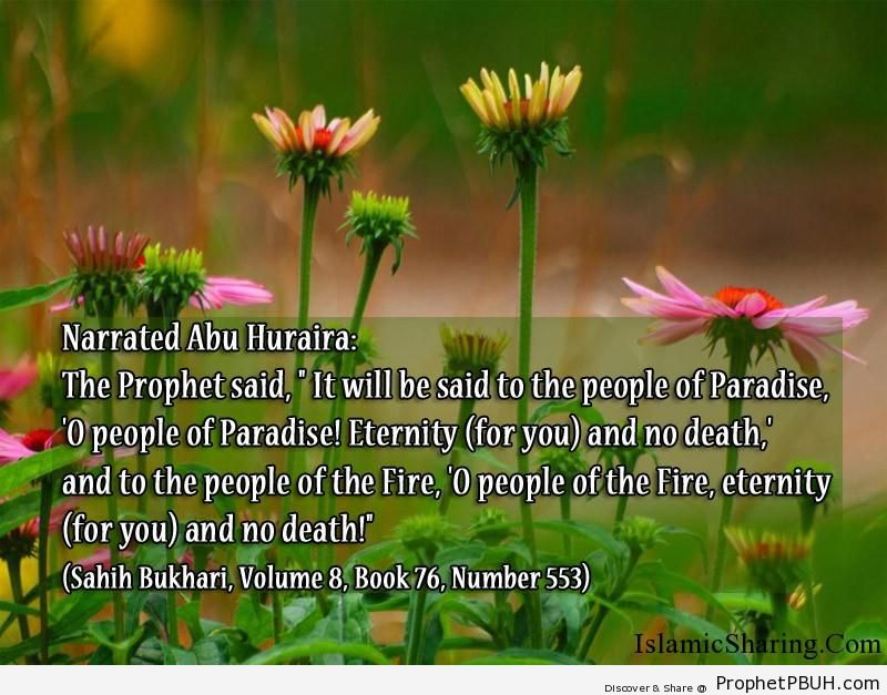 sahih bukhari volume 8 book 76 number 553