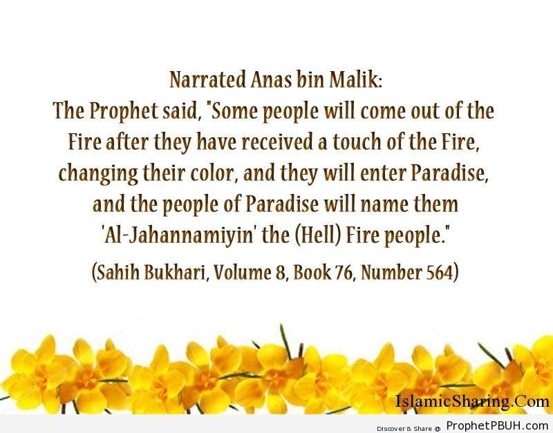sahih bukhari volume 8 book 76 number 564