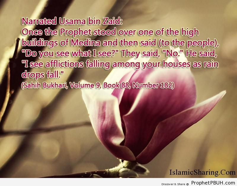 sahih bukhari volume 9 book 88 number 182