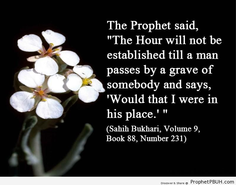 sahih bukhari volume 9 book 88 number 231
