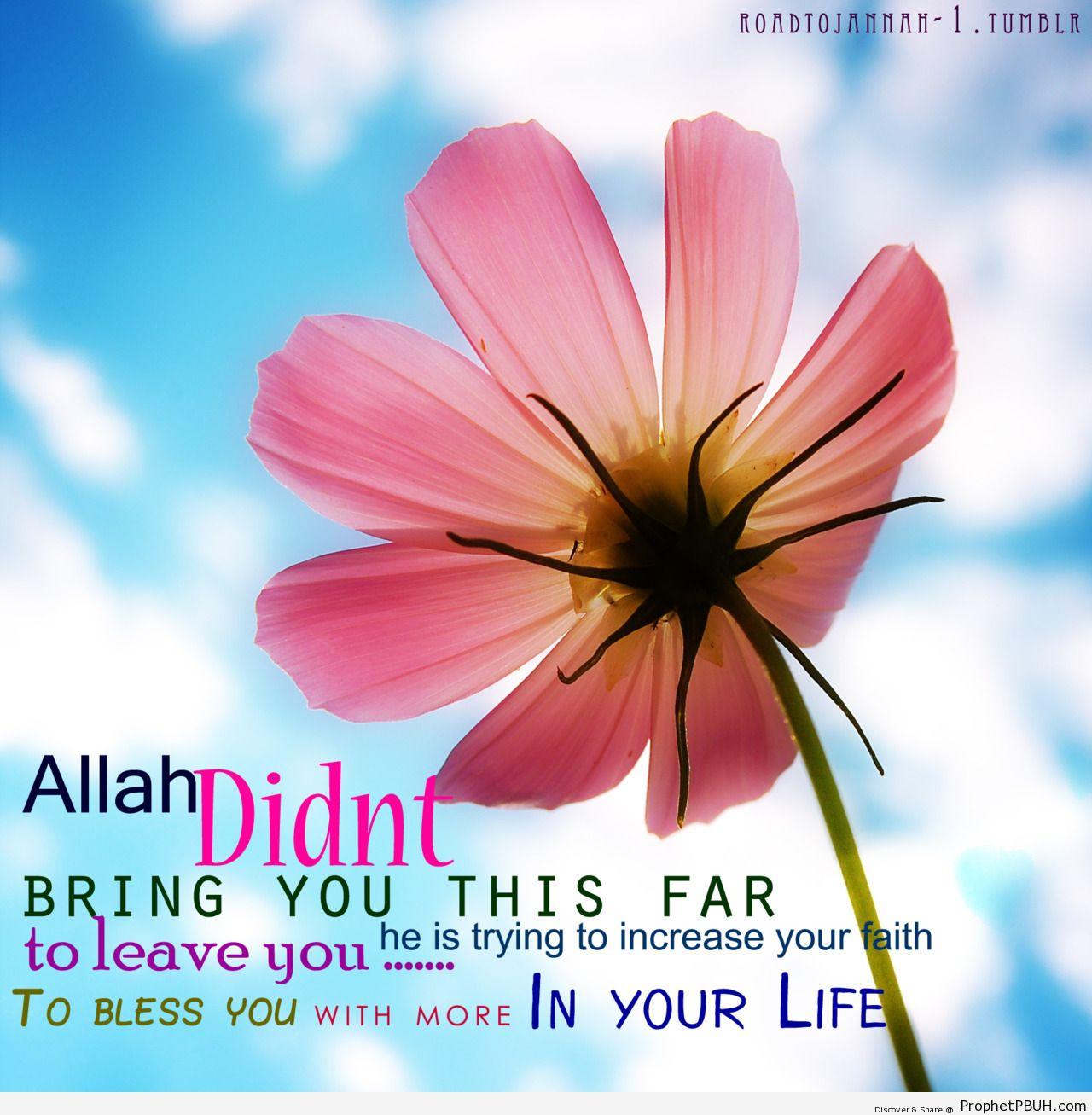 Allah wont leave you - Islamic Quotes, Hadiths, Duas
