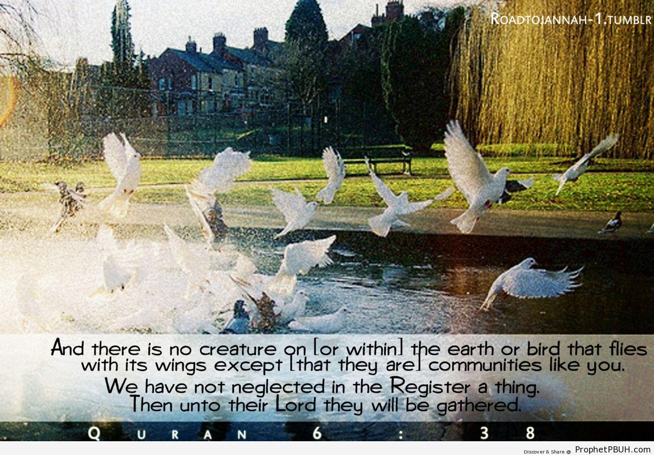 Quran 6-38 - Islamic Quotes, Hadiths, Duas