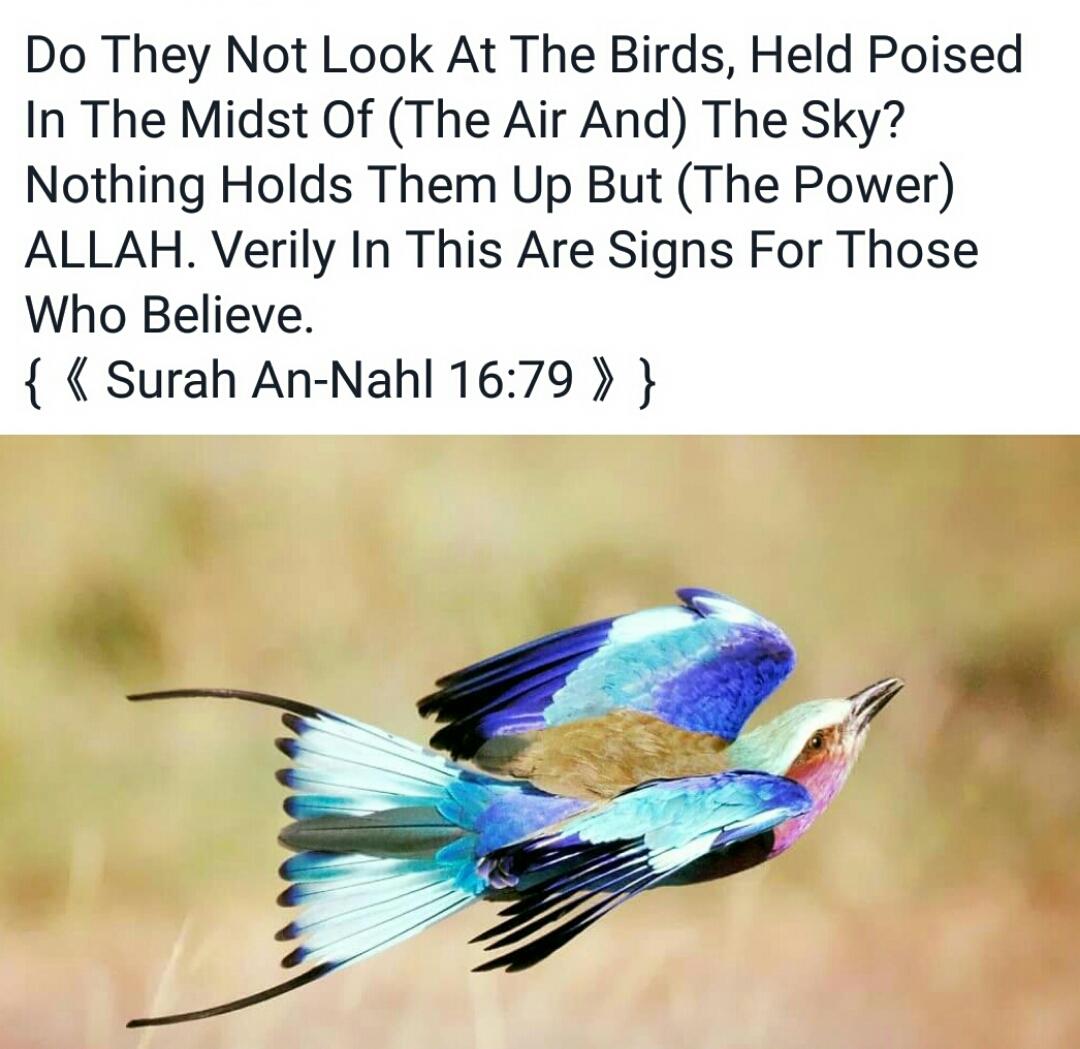 Surah An Nahl 16:79