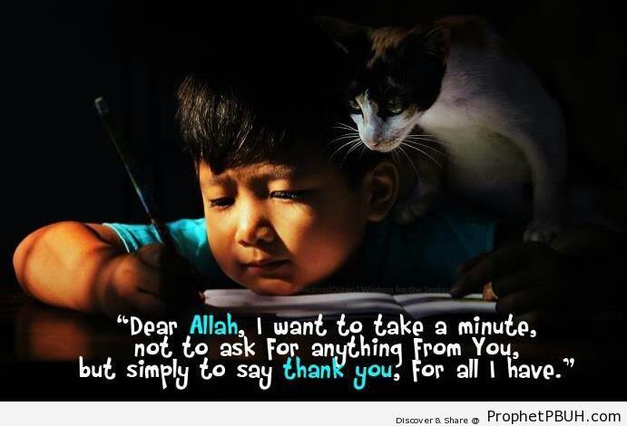 Dear Allah - Photos of Cats -