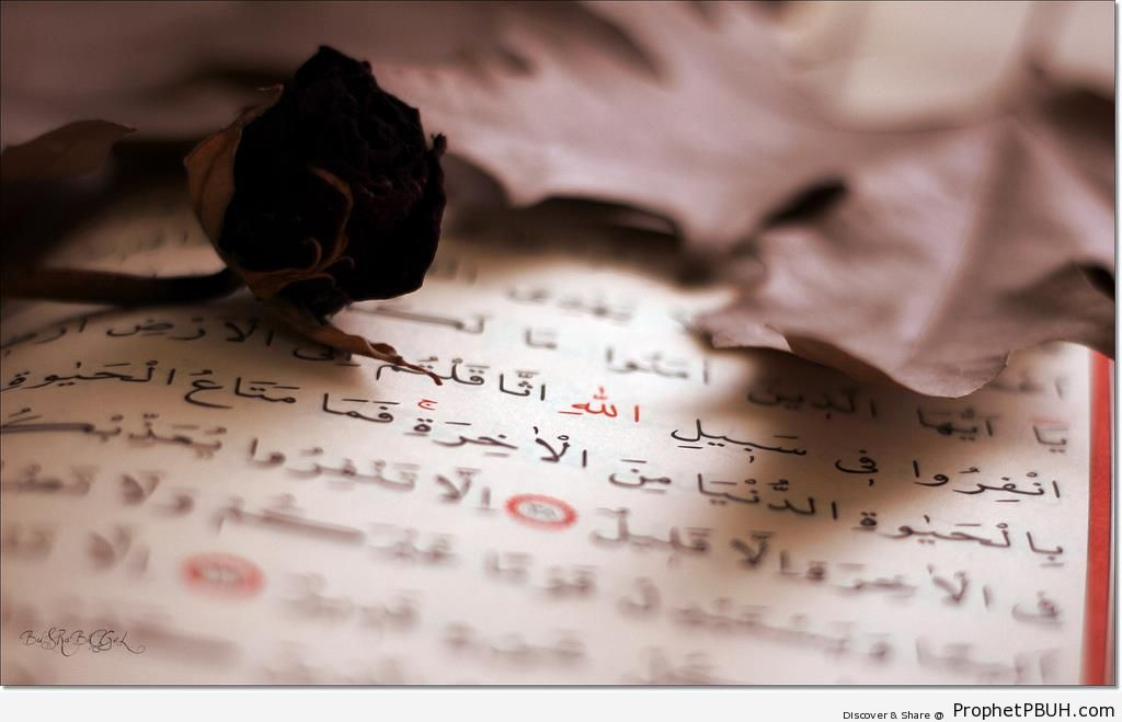 Leaf and Flower on Open Mushaf - Mushaf Photos (Books of Quran)