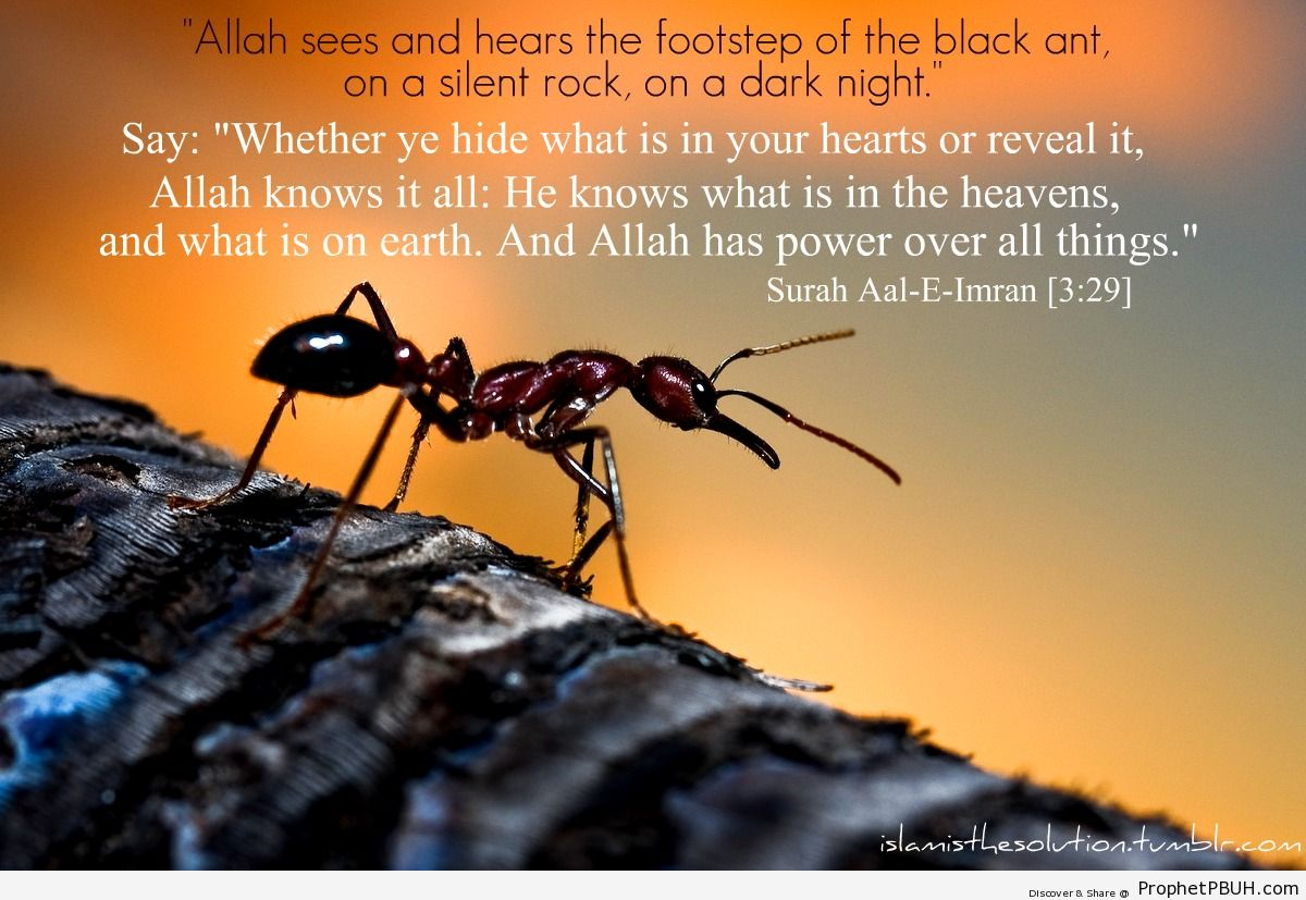 Allah the all knowing - Islamic Quotes, Hadiths, Duas